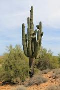 15th Apr 2018 - Very Old Saguaro Cactus