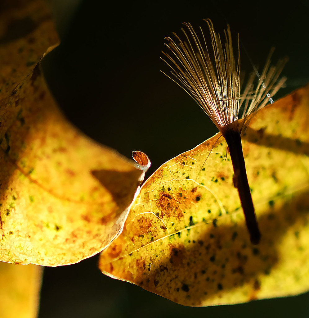 Macro seed by maureenpp