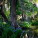 Irises are in bloom at Magnolia Gardens