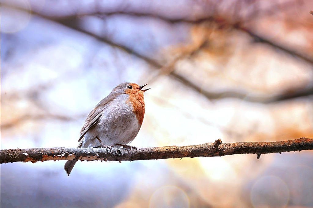 2018-04-17 singing its love song full voice by mona65