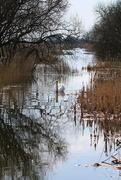17th Apr 2018 - Swan Lake!