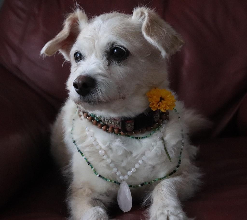My Bohemian Doggy by chloette