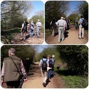 18th Apr 2018 - Our wildlife walk
