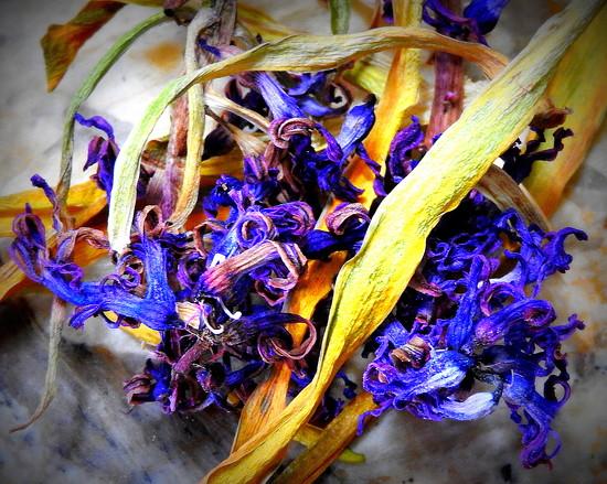 ETSOOI Hyacinth by homeschoolmom