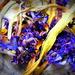 ETSOOI Hyacinth