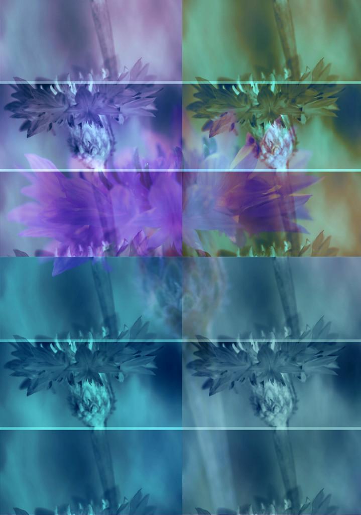 pop art by blueberry1222