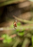 18th Apr 2018 - Spider