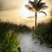 Sunrise Palm Walk by pdulis