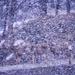 see the deer?