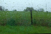 18th Apr 2018 - Showers And Grass