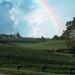 Kentucky Rainbow