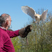 Catching a barn owl