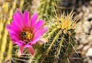 18th Apr 2018 - Cactus Color