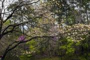 19th Apr 2018 - Spring Blossoms
