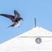 Swallow Landing Rooftop