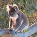 morning vigil by koalagardens
