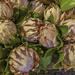 Some more Proteas ...