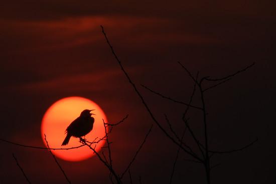 Sing Until the Sun Don't Shine by kareenking