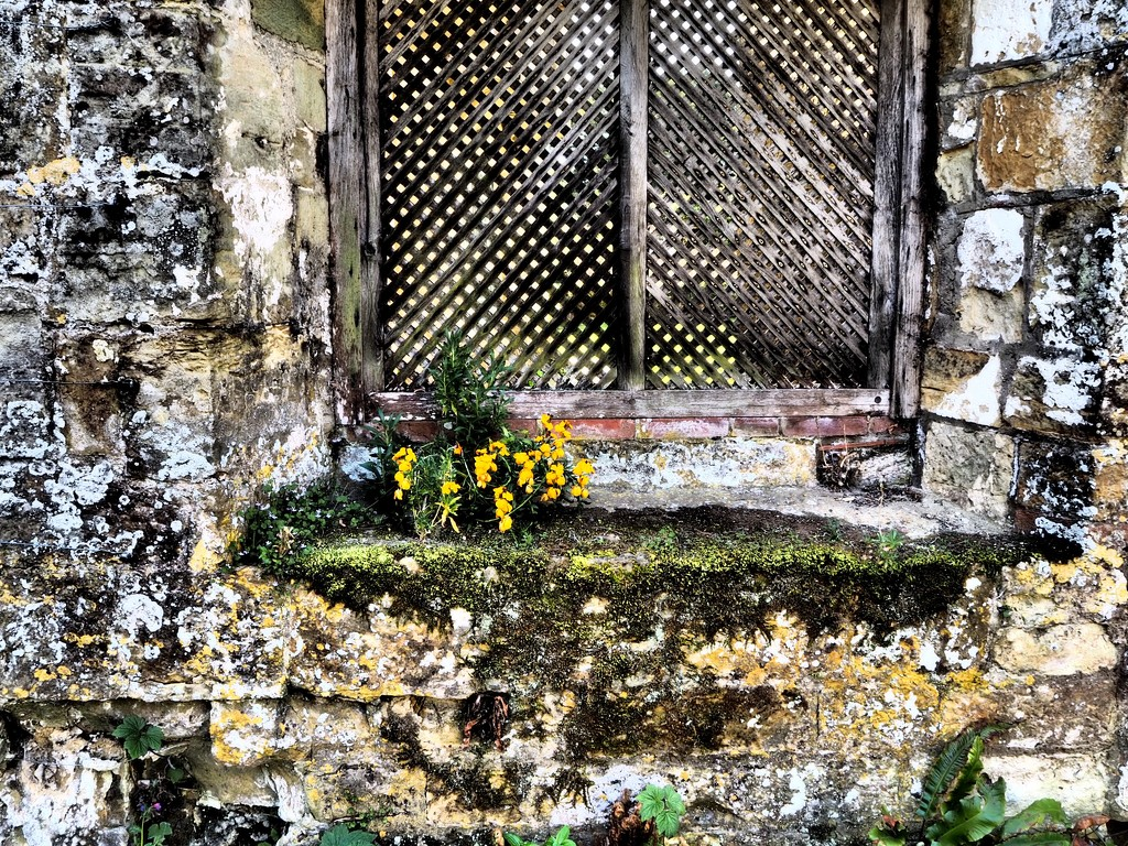 Living ruins  by suesmith