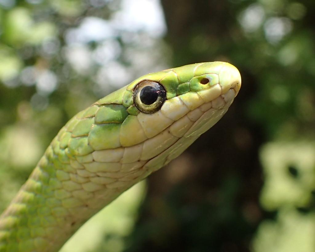 My Little Green Friend by cjwhite