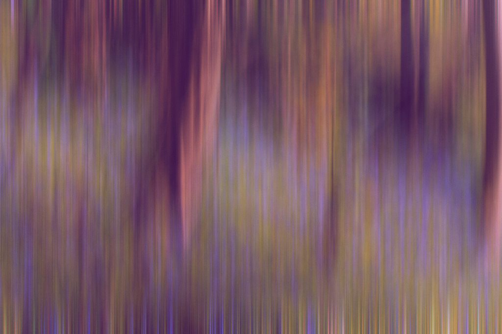 Bluebell Blur by fbailey