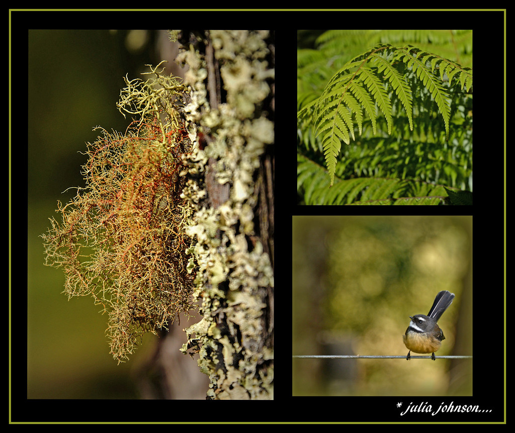 New Zealand Bush Triptych by julzmaioro