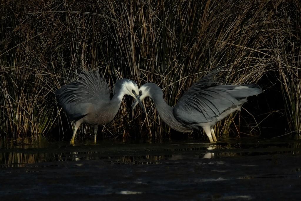 Kissing cousins? by maureenpp