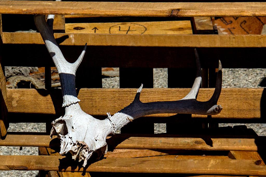 Skull by jaybutterfield