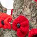 Anzac Poppies by yorkshirekiwi