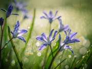 22nd Apr 2018 - In the morning dew