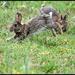 Playful bunnies by rosiekind
