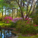Spring colors at Magnolia Gardens