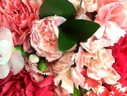 21st Apr 2018 - PINK carnations of every shade