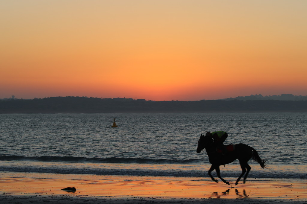 Early morning horse training by gilbertwood