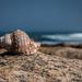 Shell on a rock by mv_wolfie