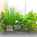 Instant Herb Garden