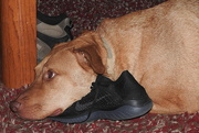 25th Apr 2018 - Guess I'll sleep on your shoe and look pathetic!