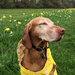 """""""Look Mom, I'm a Daffodil!"""""""