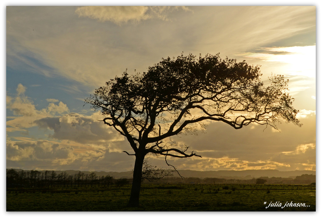 The Prevailing Wind... by julzmaioro