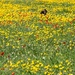 Flower Power + spaniel