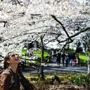9th Apr 2018 - Hanami in New York