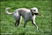 26th Apr 2018 - Fetching his stick