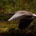 Spruce Goose by ellida