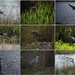 A morning with the Heron