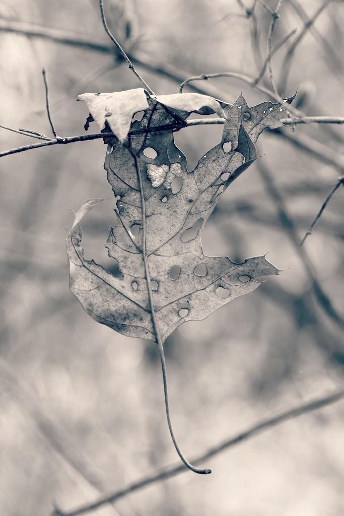 It Was a Long Winter by juliedduncan