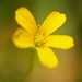Yellow Flower, From Weed!