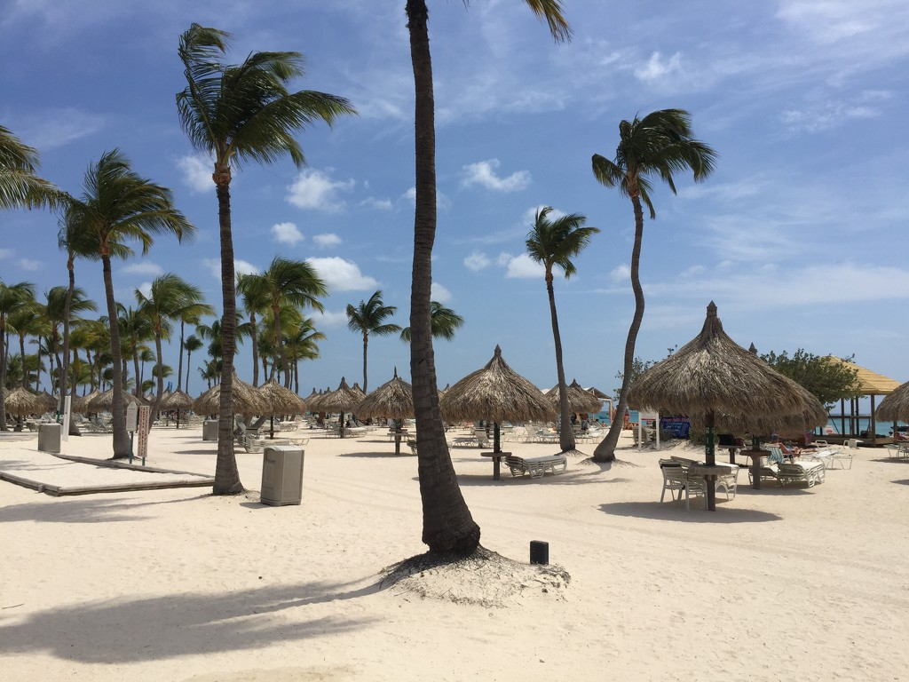 Aruba by loweygrace