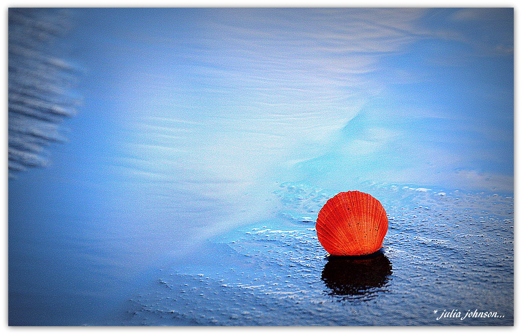 Queen Scallop... In the Blue.. by julzmaioro