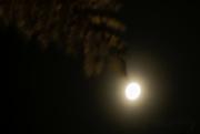 27th Apr 2018 - Misty Moon