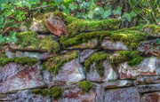 27th Apr 2018 - Mossy dry-stone wall